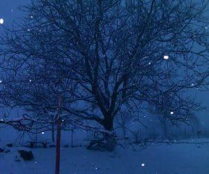 viata la tara iarna