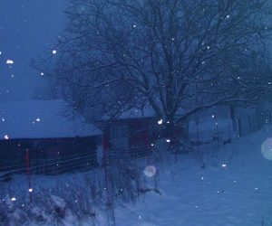 Iarna in spatele casei