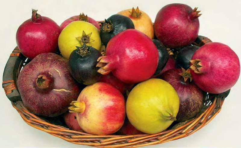 Imaginea thumbnail despre Rodia si sucul de rodie – Beneficii în peste 700 de seminte