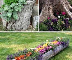 DIY buturugi de lemn jardiniere pentru flori