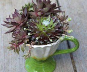 DIY ceasca pentru flori