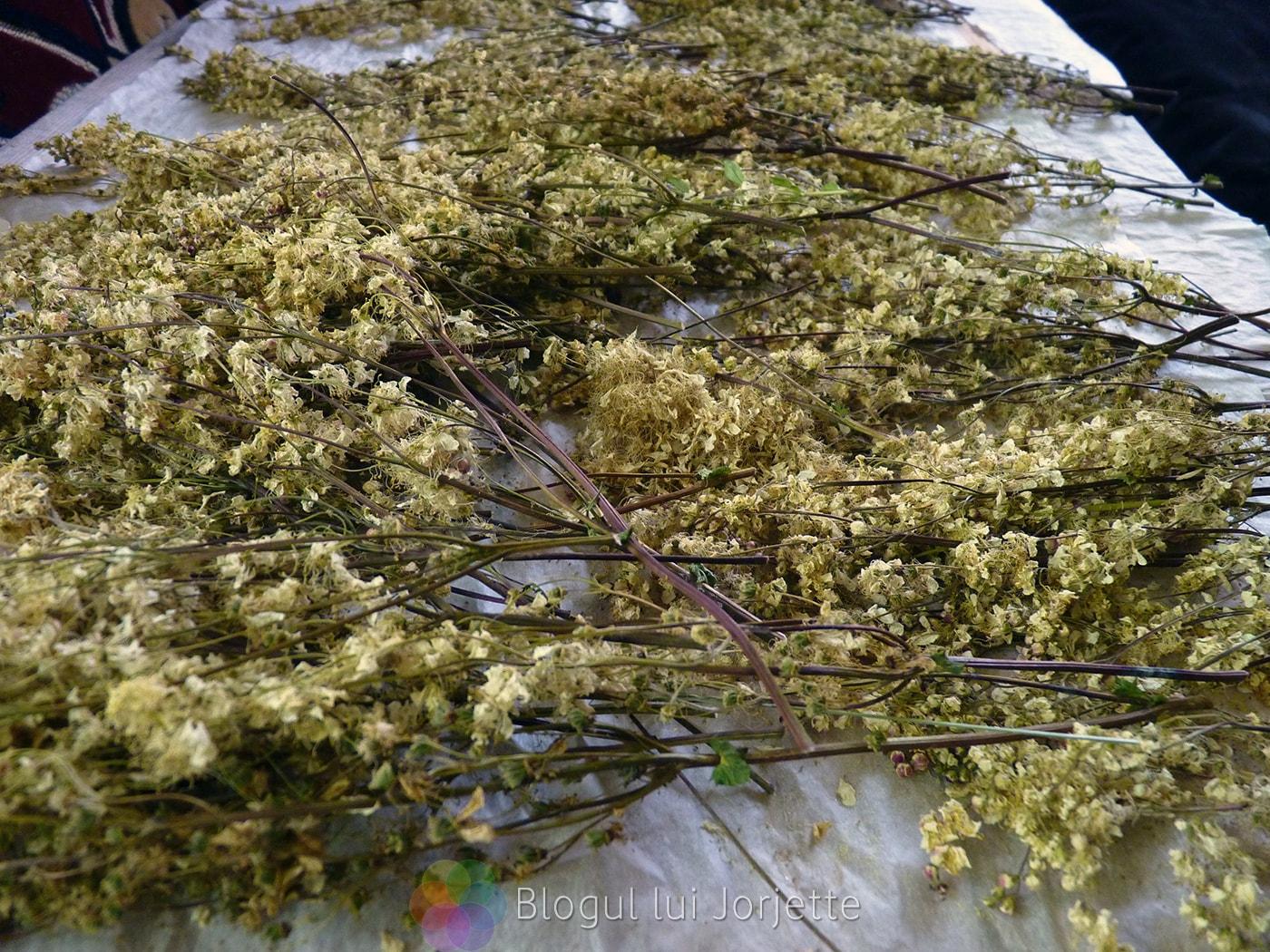 Flori de cretusca la uscat aspirina casei