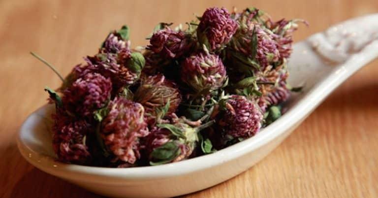 trateaza cancerul cu ceai de trifoi rosu