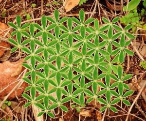 Imaginea thumbnail despre Floarea Vietii – Simbol al unitatii, semnificatie si beneficii