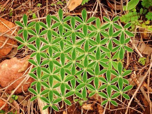 floare vietii simbol sacru in natura
