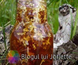 Imaginea thumbnail despre Liliacul in tratarea colicilor hepatice si a reumatismului