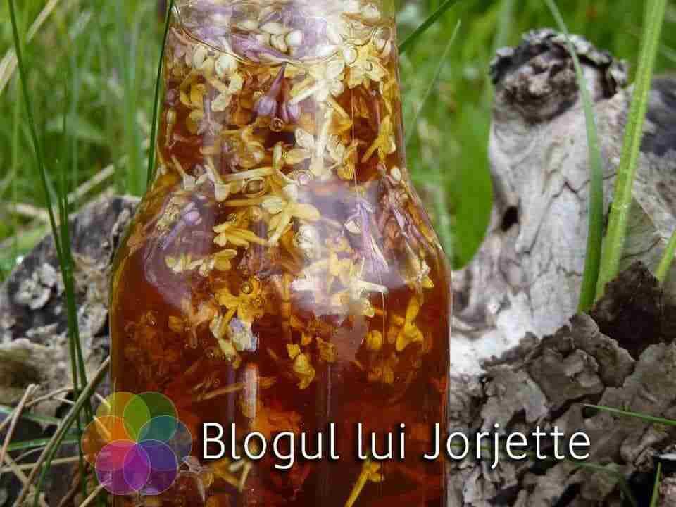 Sirop de liliac - Miere cu flori de liliac macerate
