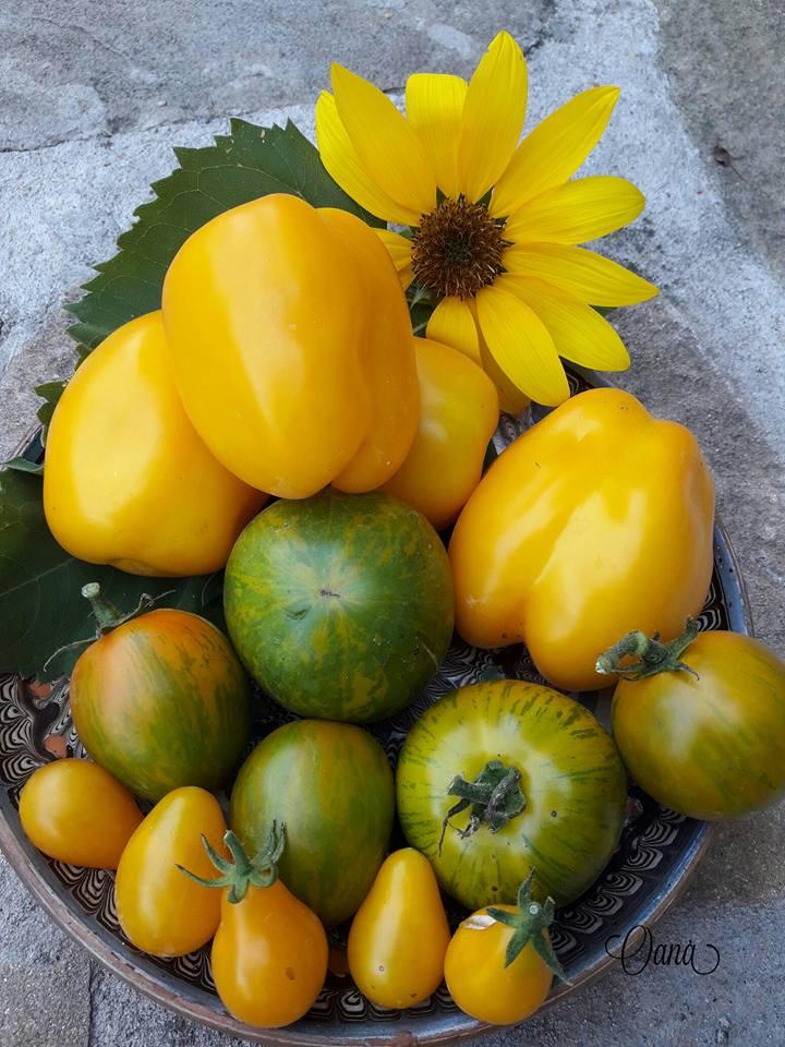 Rosiile de gradina galbene proprietati si beneficii