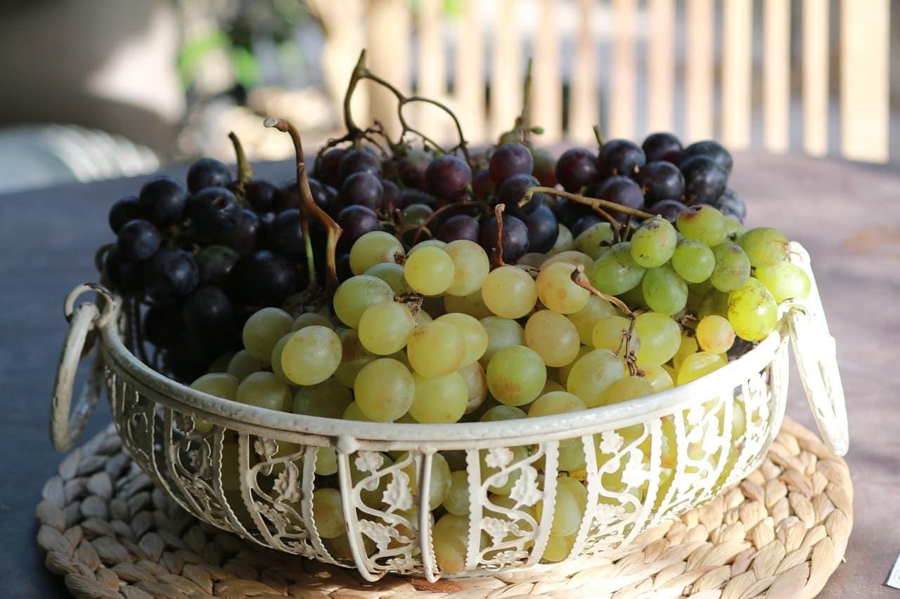 Imaginea thumbnail despre Strugurii şi mustul dulce în medicina naturală – cura cu struguri