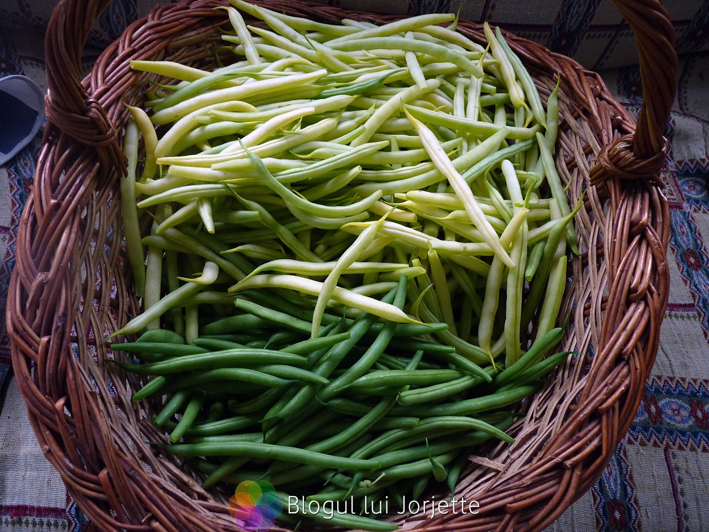 Imaginea thumbnail despre Fasolea uscata si fasolea verde – Beneficii, proprietati, remedii