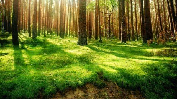 alege viata - Natura este cea care te vindeca