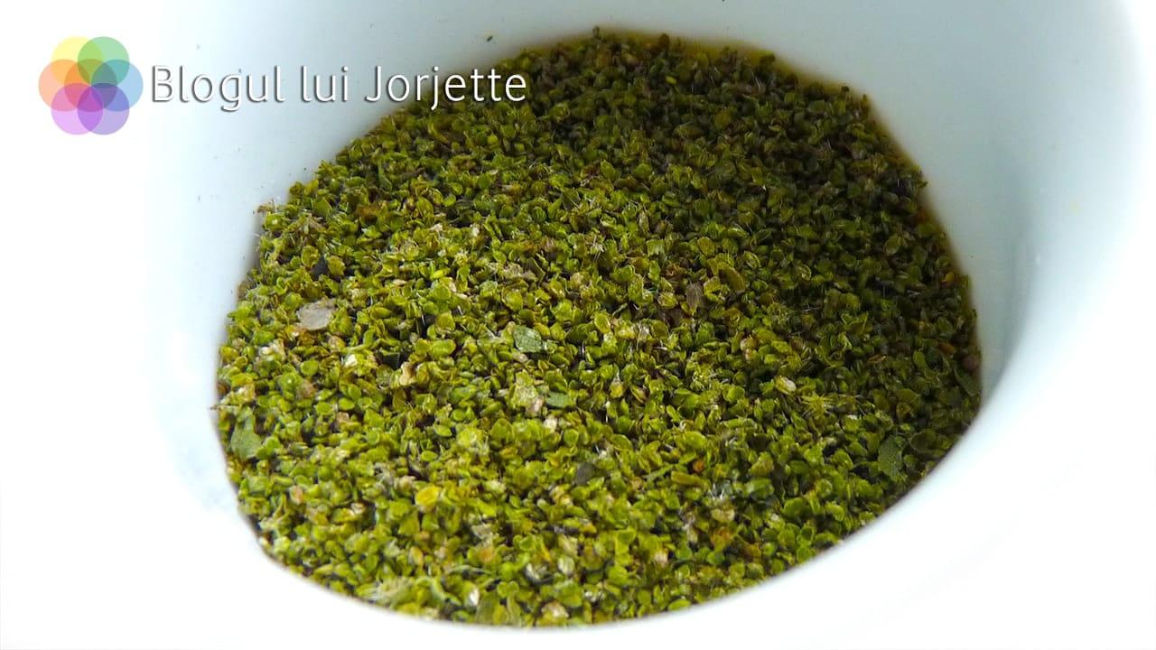 Seminte de urzica proaspata