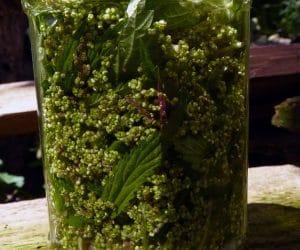 Seminte de urzica si frunze in alcool