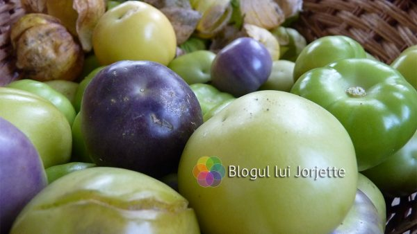 Tomatillo verde si tomatillo mov