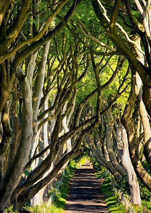 Game of Thrones - Dark hedges in irlanda de nord