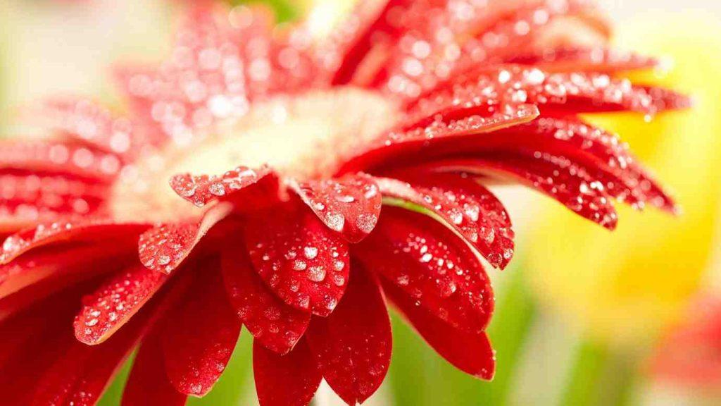 fii frumoasa ca o floare