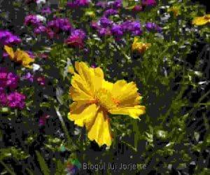 Coltul cu flori