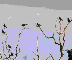 Pasarele in copaci