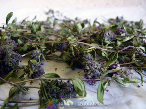 Cimbrisor de camp planta medicinala la uscat