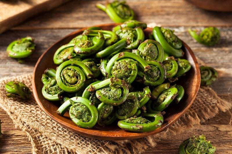 Varfuri de feriga plante salbatice comestibile primavara