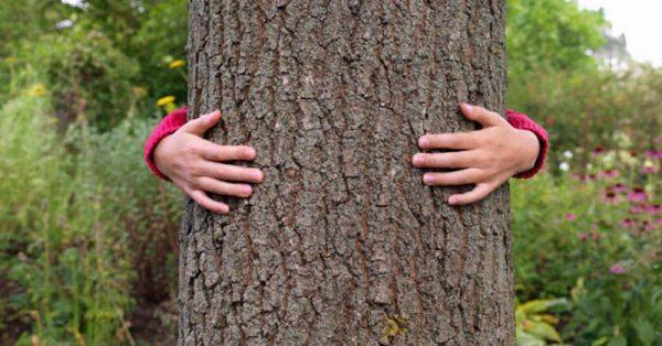 Imbratisarea copacilor