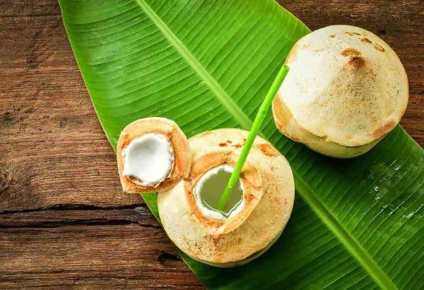 Nuca de cocos verde tanara