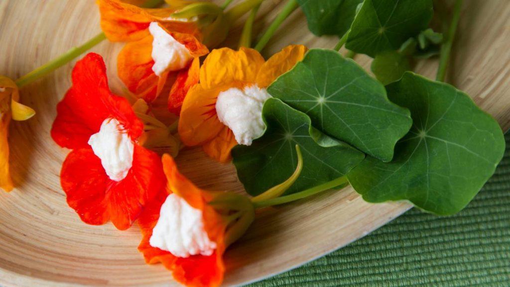 Flori de caltunasi umplute cu branza