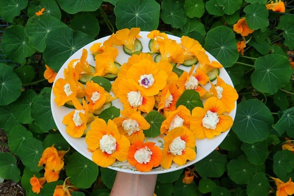 Flori de caltunasi umplute cu crema de branza cu usturoi si coaja de lamaie