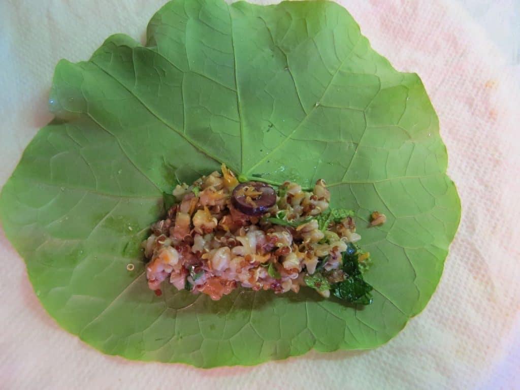 Sarmale cu frunze de condurasi cu umplutura vegana de post