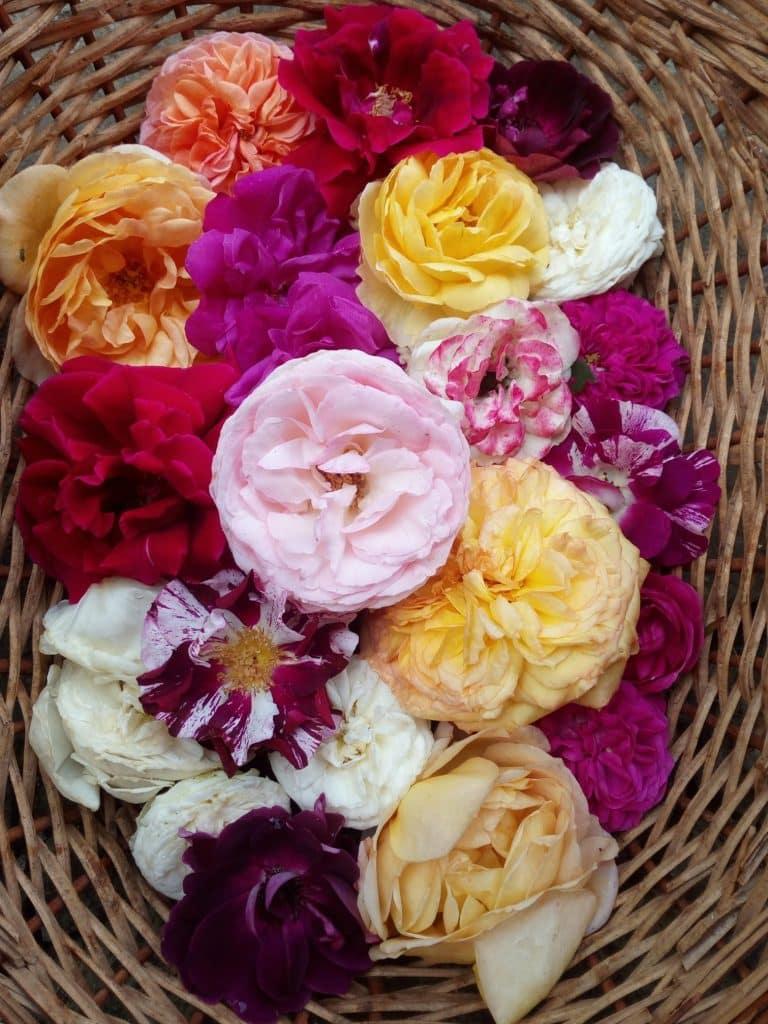 Ce poti sa faci cu petalele de trandafiri