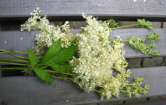 Cretusca planta medicinala aspirina casei