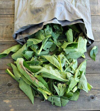 Frunze de tataneasa pentru fertilizator ingrasamant lighid